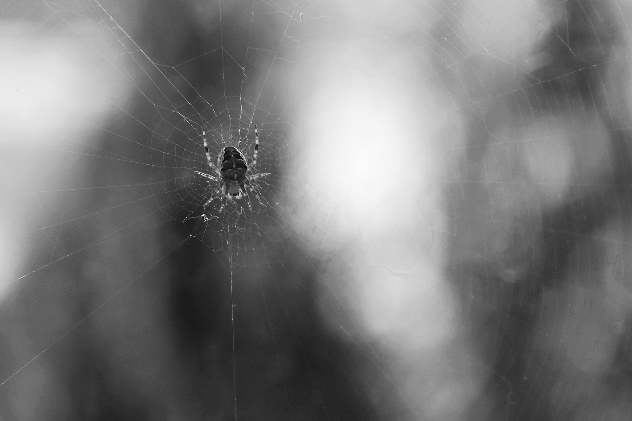 Photograph a little spider by Janine G. on 500px