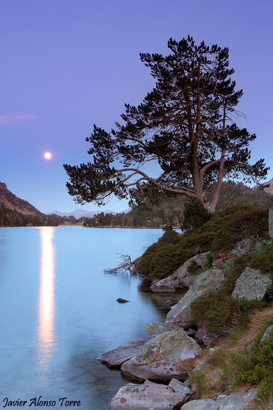 Photograph The tree and the moon by Javier Alonso Torre on 500px