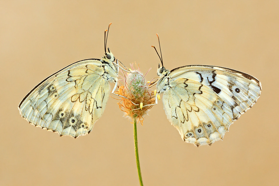 Photograph Identical twins by S. Amer on 500px