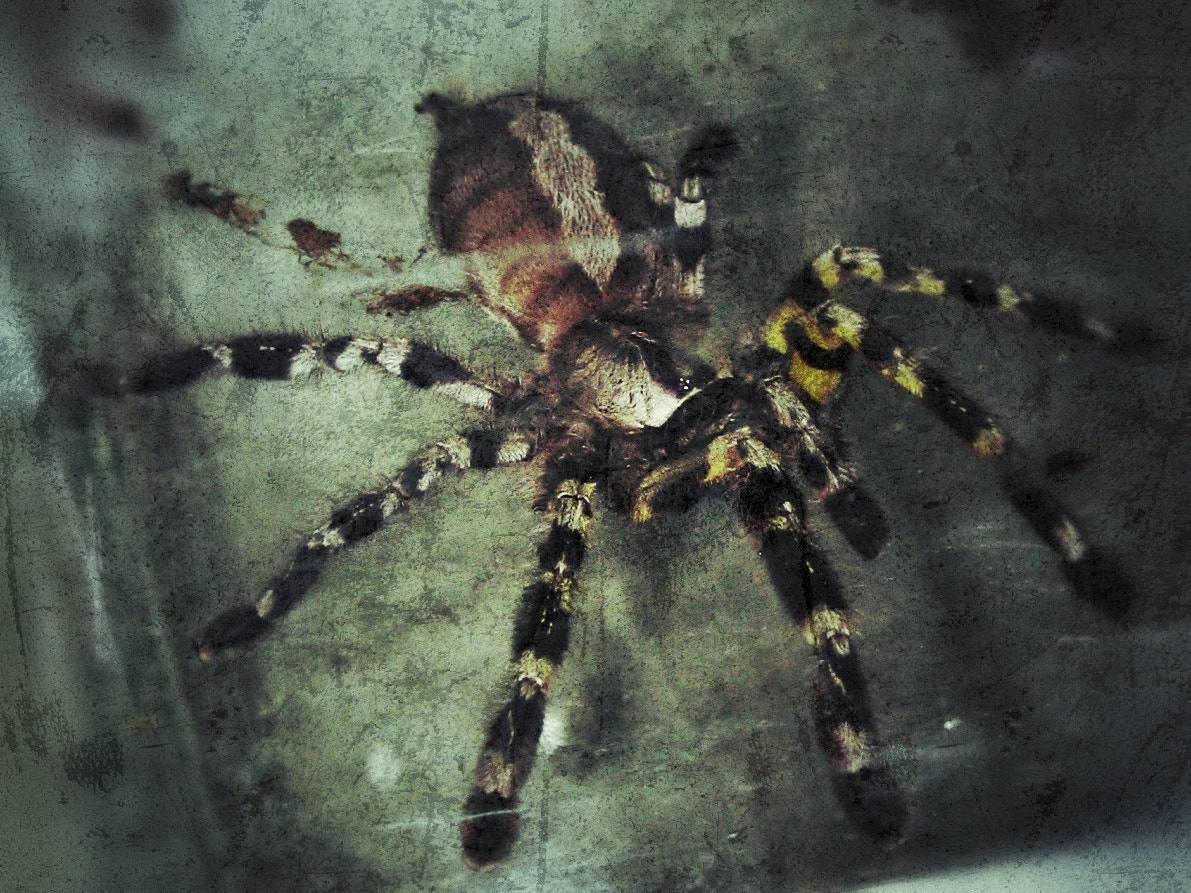 Photograph Danger In The House by David L. on 500px