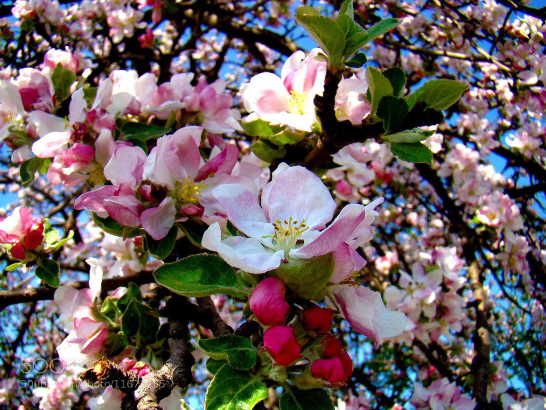 Photograph spring by Valentina Yoncheva on 500px
