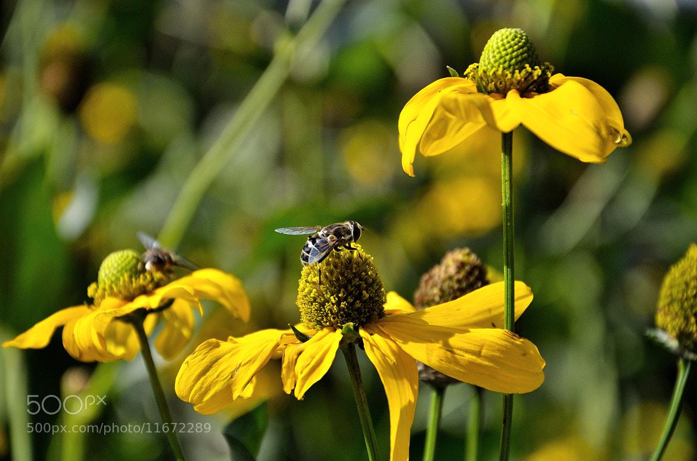 Photograph Garden Abuzz by Mike Czumak on 500px