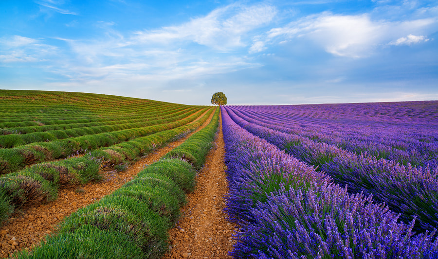 Lavender by Vadim Balakin on 500px.com