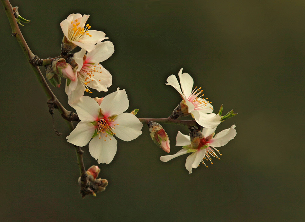 Photograph spring and by önder çiner on 500px