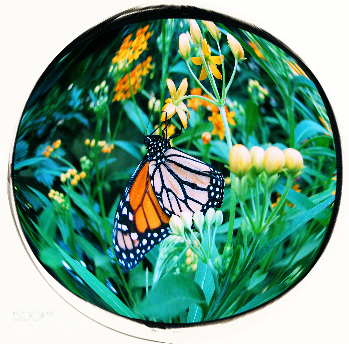 Photograph butterflyglobe by mel mayse on 500px