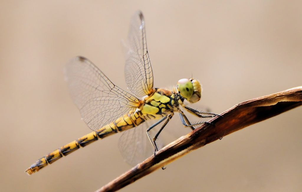 Photograph dragonfly by sero  on 500px