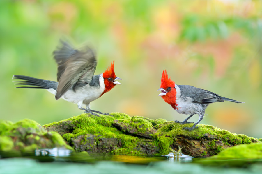 ~ Angry Birds - Are you angry ~ by FuYi Chen