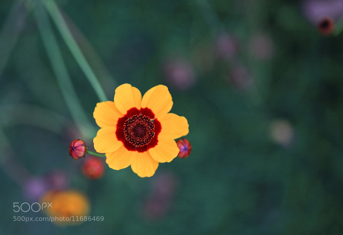 Photograph little flower by joanlamm  on 500px