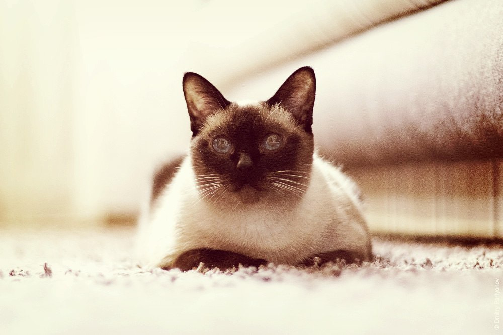 Photograph Cappuccino cat with more milk by Dmitry Parfyonov on 500px