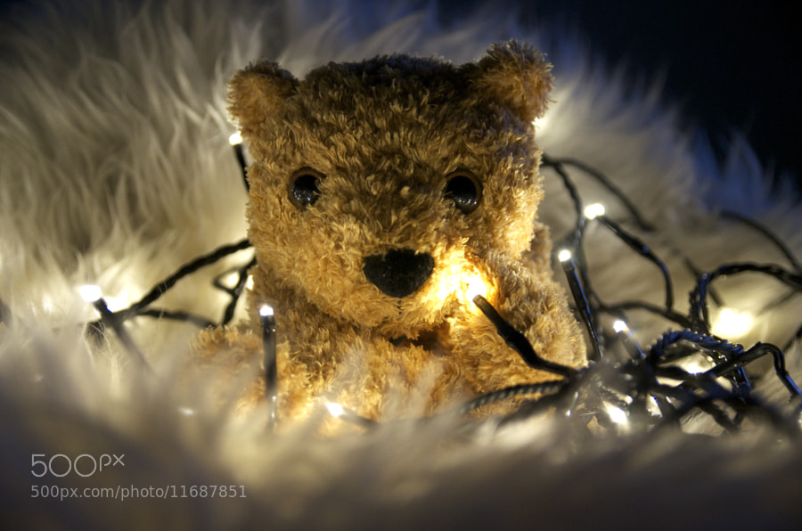 Photograph Teddy by Ara Simos on 500px