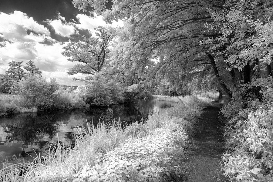 River Wey Infrared