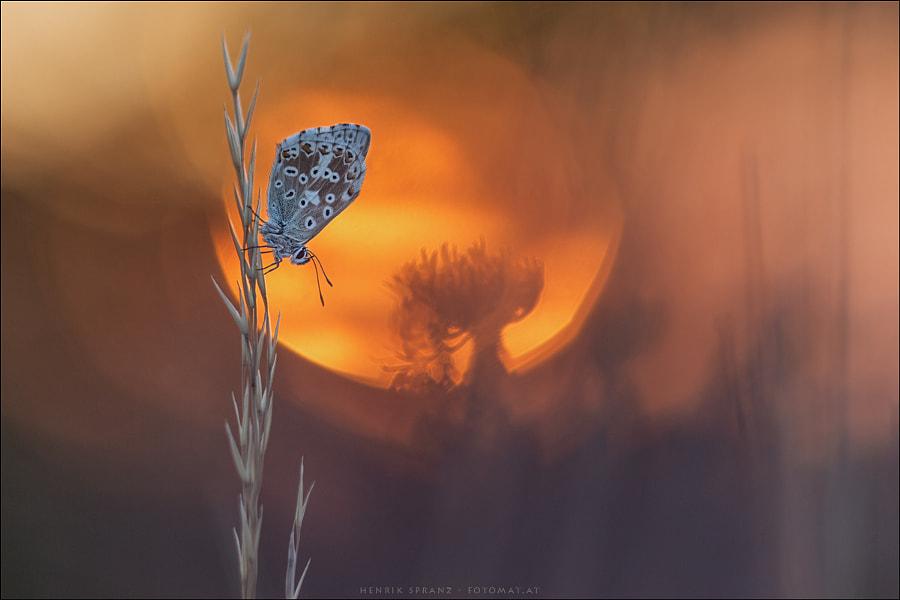 ~ Rising Sun ~