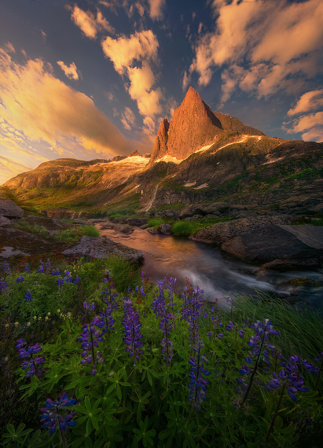 Of All Wonders by Marc  Adamus