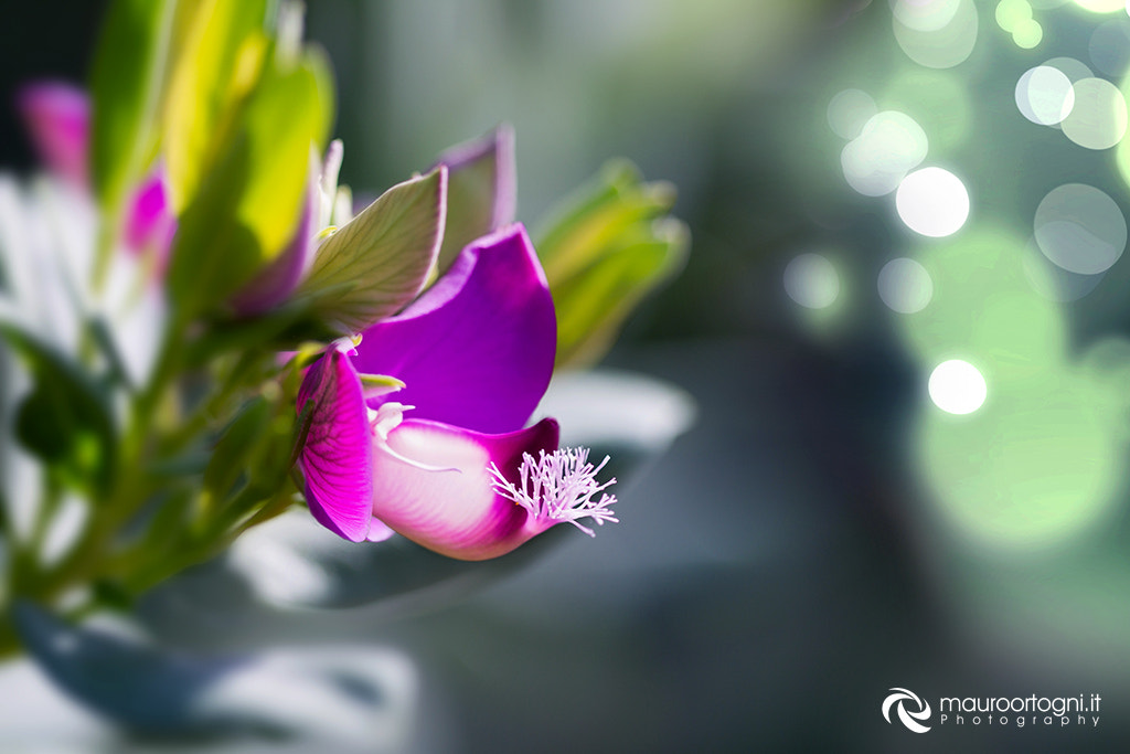 Photograph Flower by Mauro Ortogni on 500px