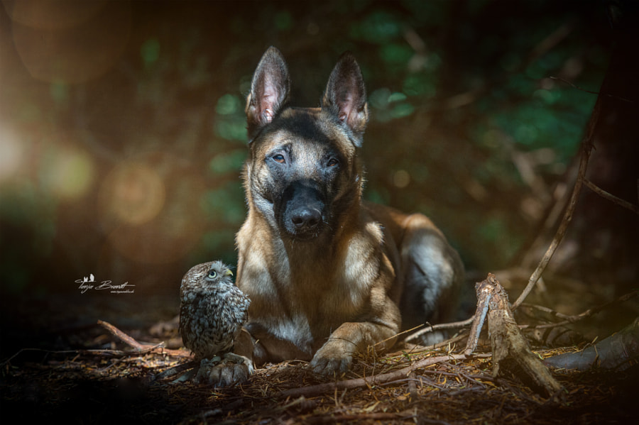 Wald by Tanja Brandt on 500px.com