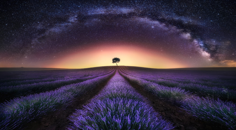 Lavender Field & Milky Way I by Jesús M. García © on 500px.com