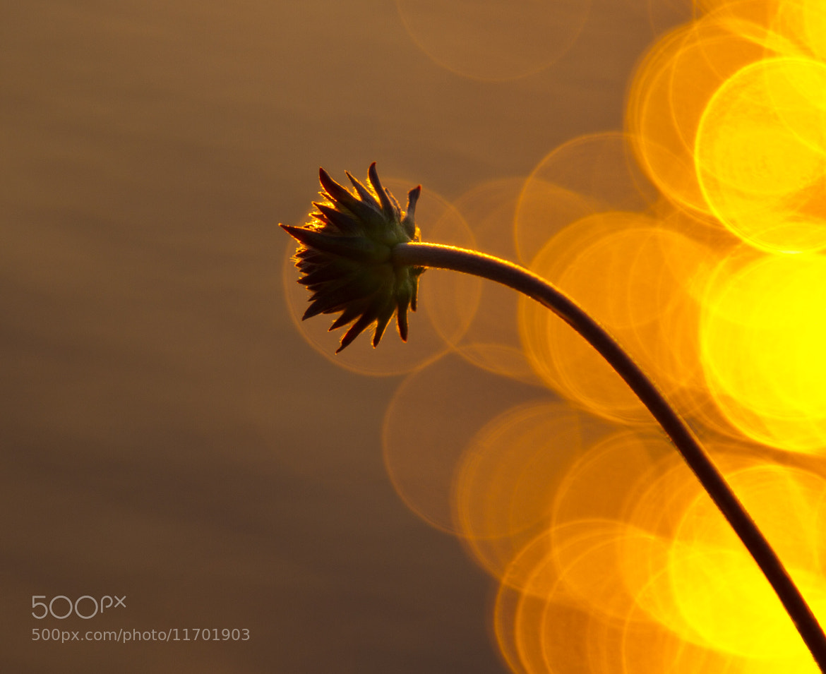 Photograph Eclipsed by Robert Lohne on 500px