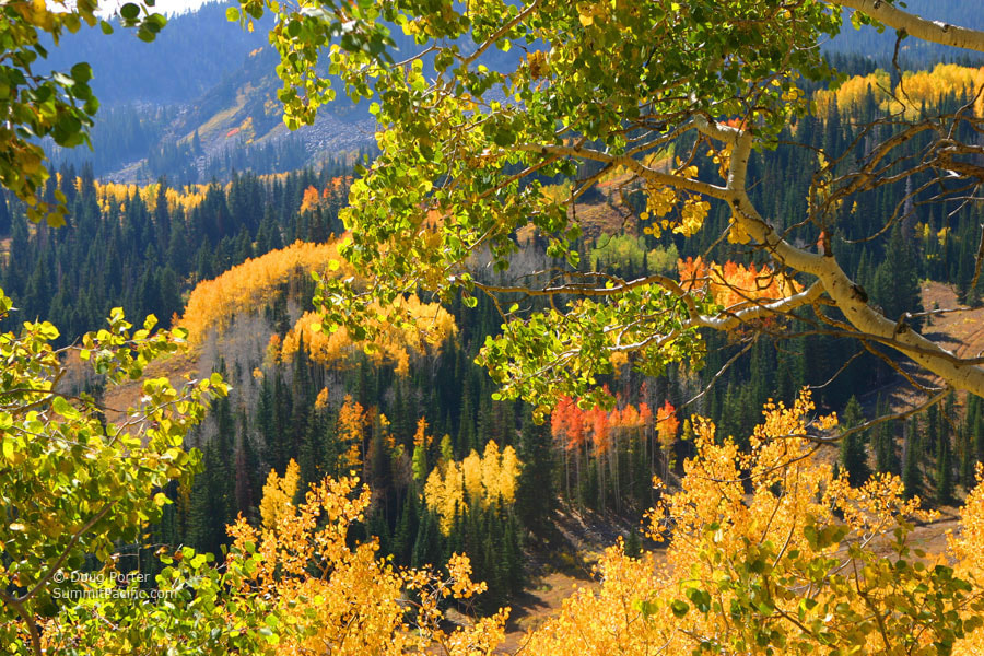 Photograph Wasatch Autumn by Doug Porter on 500px