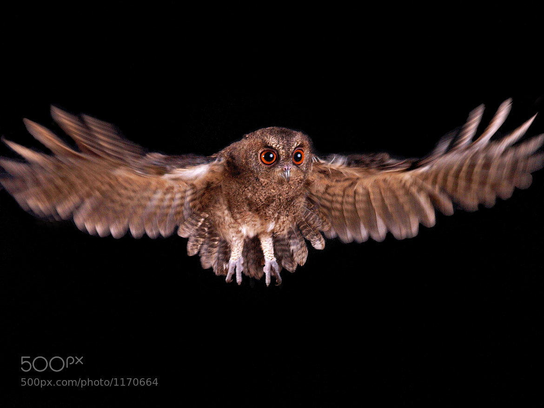 Photograph night flight by Irawan Subingar on 500px