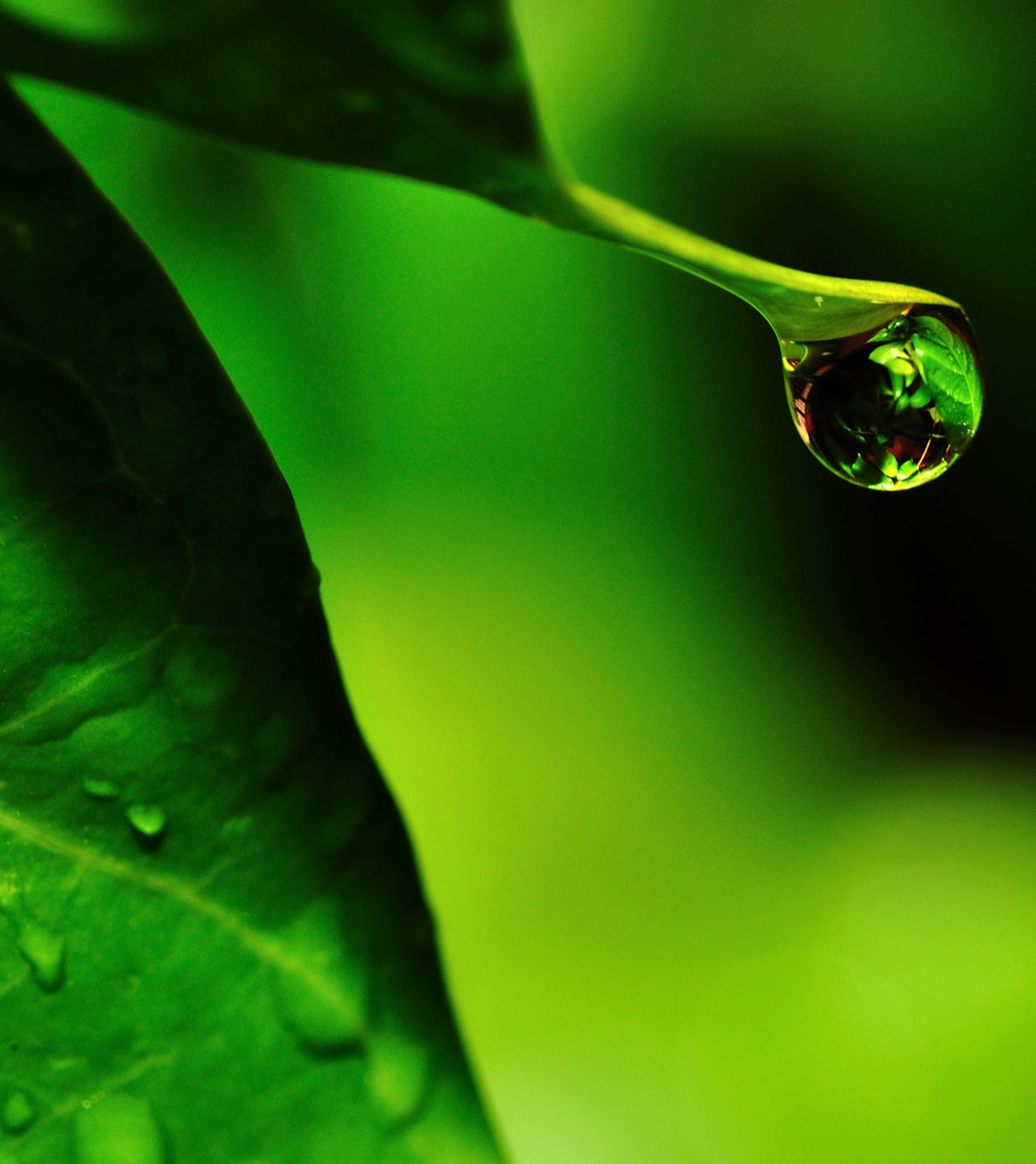 Photograph A drop of Earth by Suresh Menon on 500px