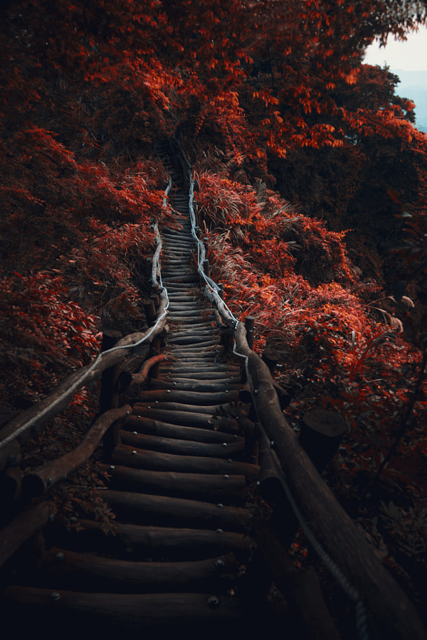 Photograph Dark Path by Hanson Mao on 500px