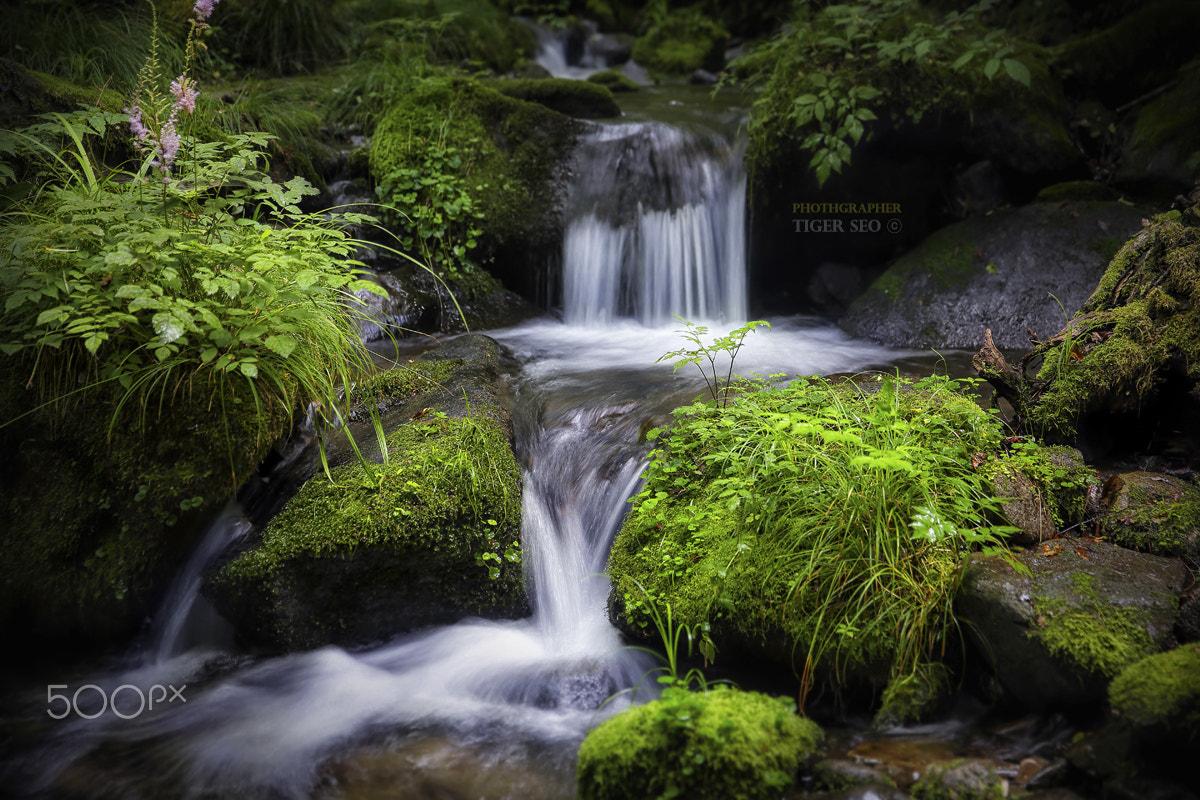 Moss & Fall