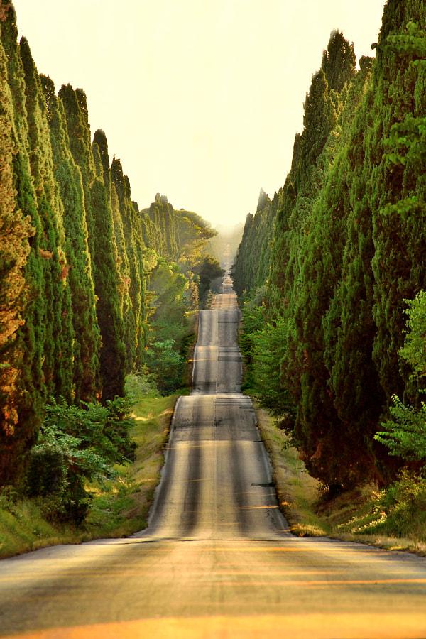 viali alberati toscana