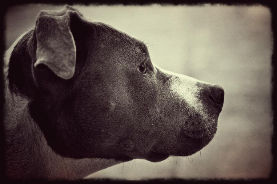 ella the dog
