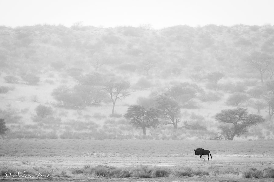 Photograph Isolation in Black & White by Andrew Beck on 500px