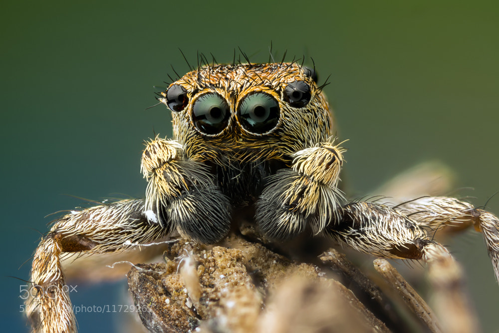 Photograph Look into my eyes by Markus Reugels on 500px