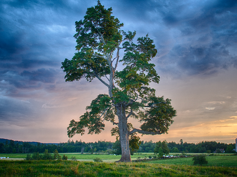 Photograph Tree at Sunset by John Poltrack on 500px
