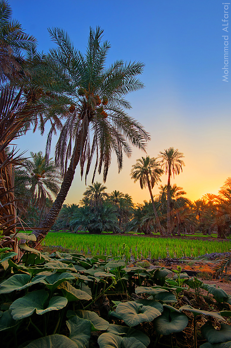 Photograph Al hassa morning by Mohammad Alfaraj on 500px