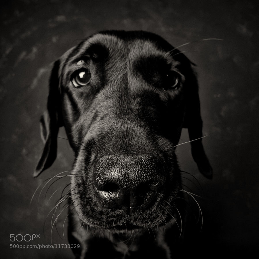 Photograph just a portrait by Martin Waldbauer on 500px
