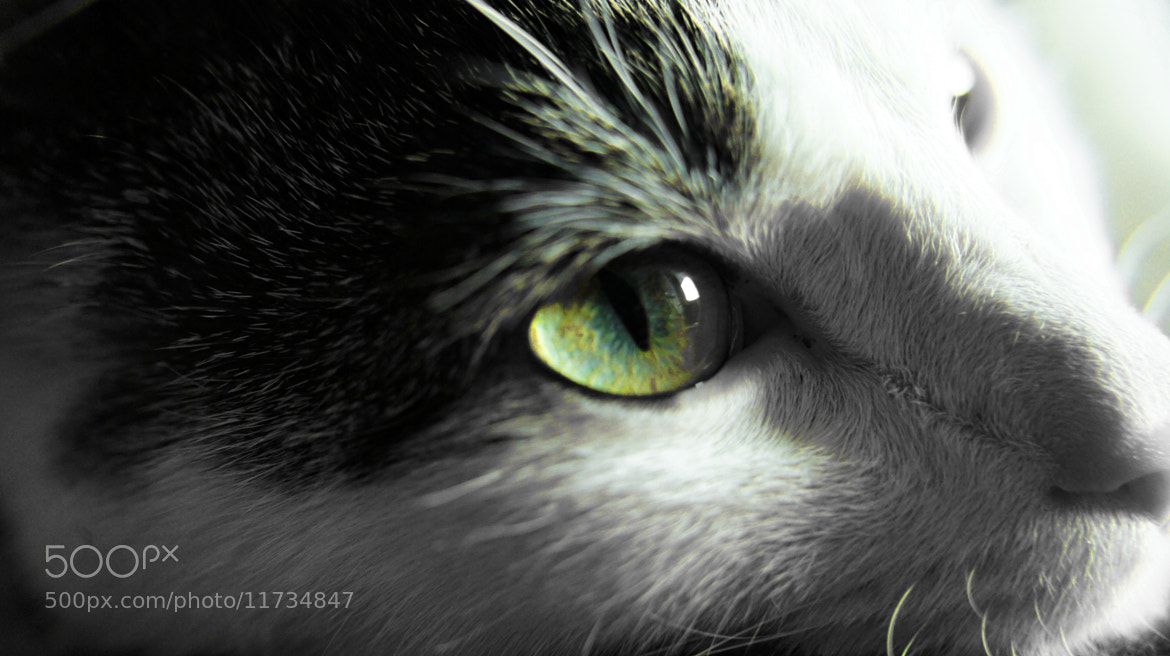 Photograph Cat by Hiwa  on 500px