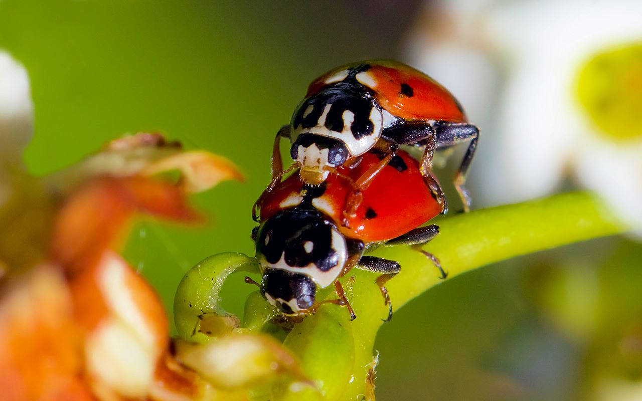 Photograph ladybugs in love by Kayman Studio on 500px