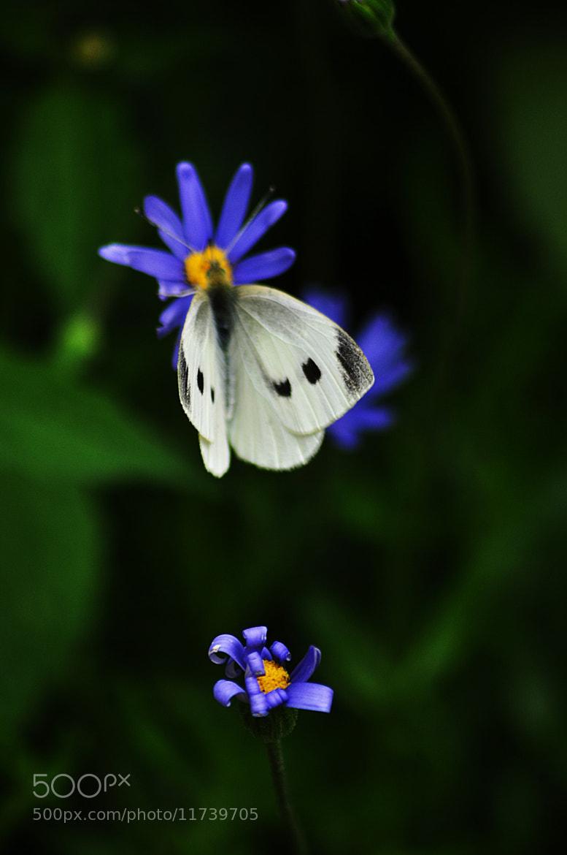 Photograph Papillon by Delphine Jourdren on 500px
