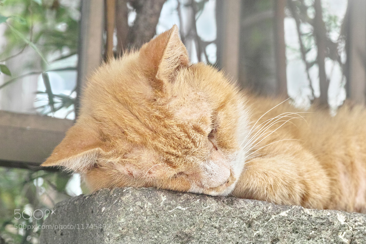 Photograph ZZZZz.... by marbee .info on 500px