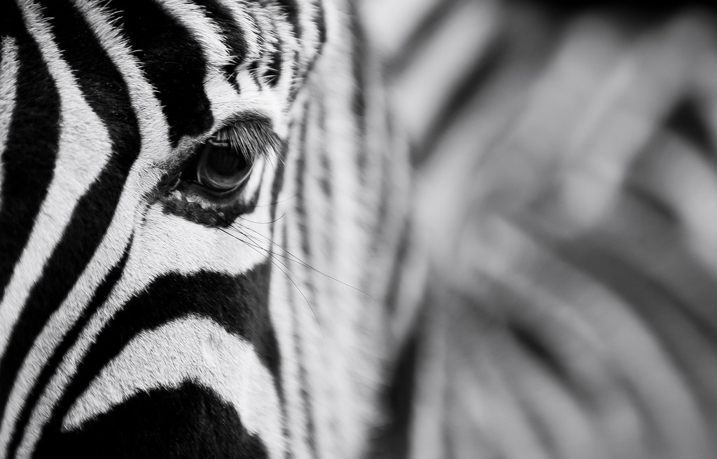 Photograph Stripes by Richard Pardon on 500px