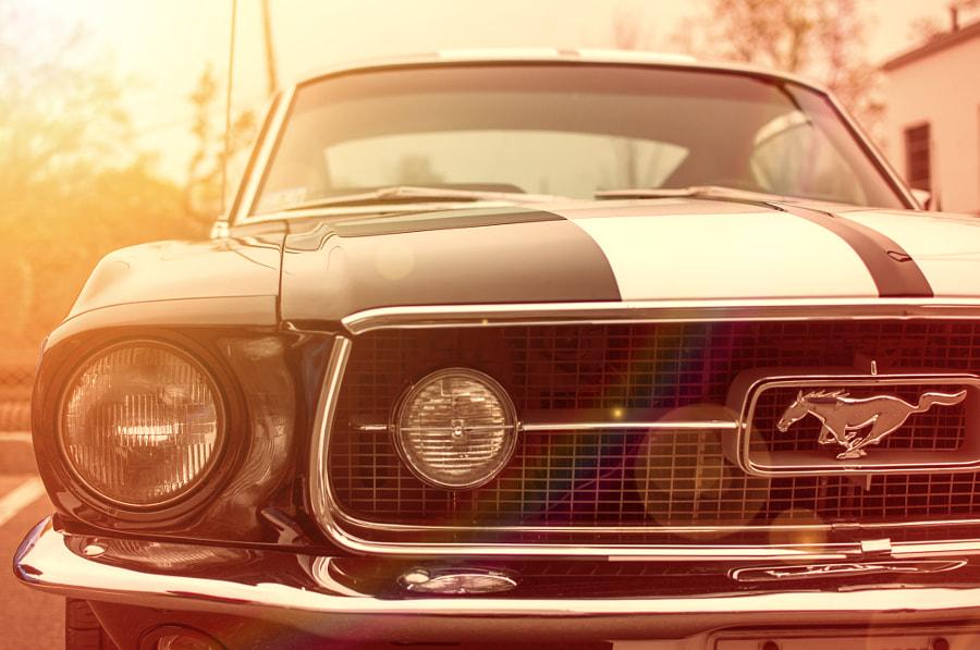 Sun Kissed Mustang