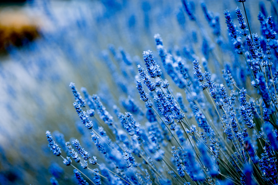 blue by Olia Papaskiri on 500px.com