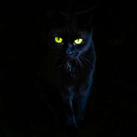 International Cat Day - The Mysterious Cat