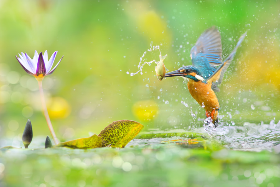 ? A Decisive Moment ? by FuYi Chen on 500px.com