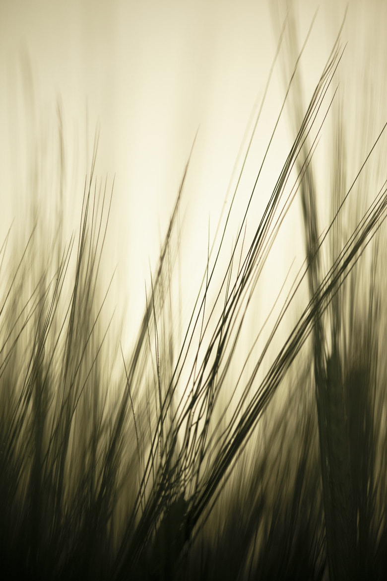 Photograph Every Grass by Stephen Lyons on 500px