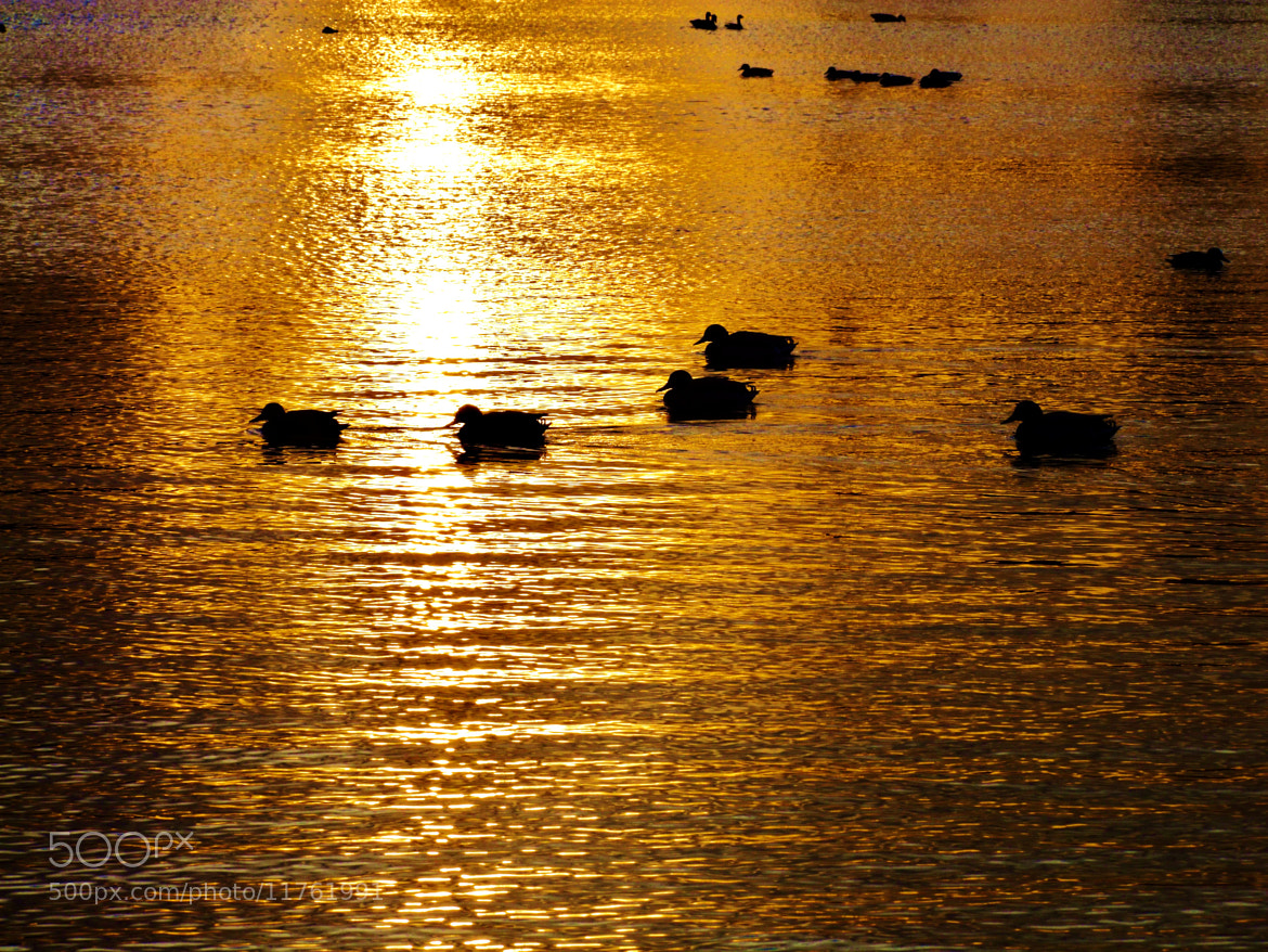 Photograph Golden  by Thomas  Stevens on 500px