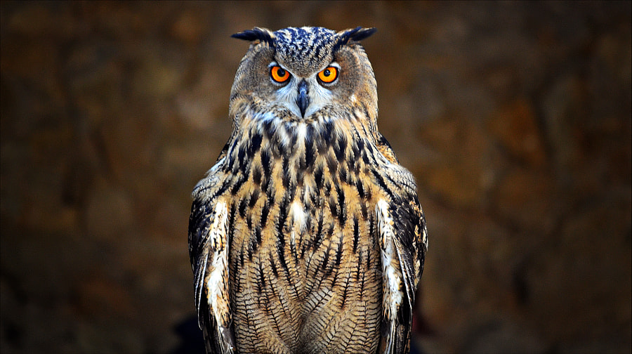 eagle owl by Fred Matos on 500px.com
