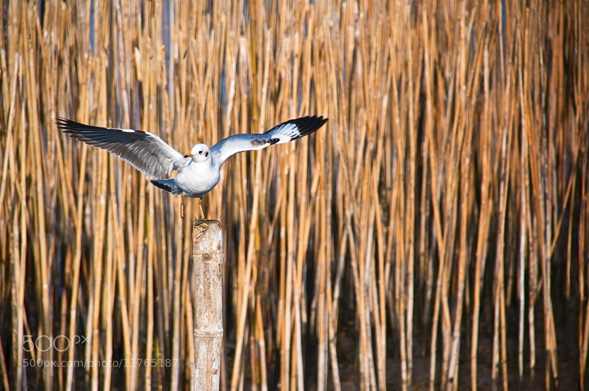 Photograph Freedom Wings by Krissana Amorn on 500px