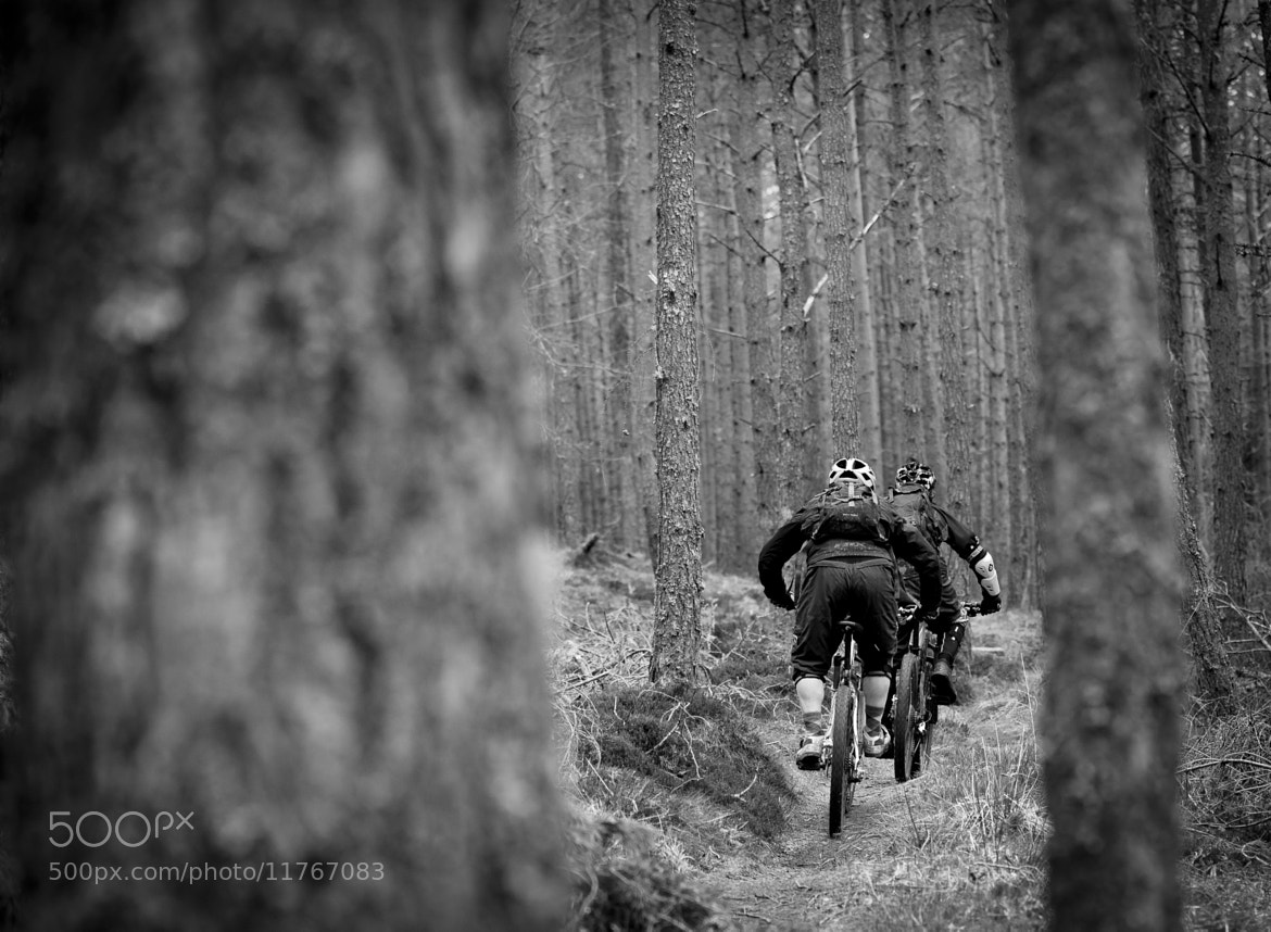Photograph Through the trees by Alan Meikle on 500px