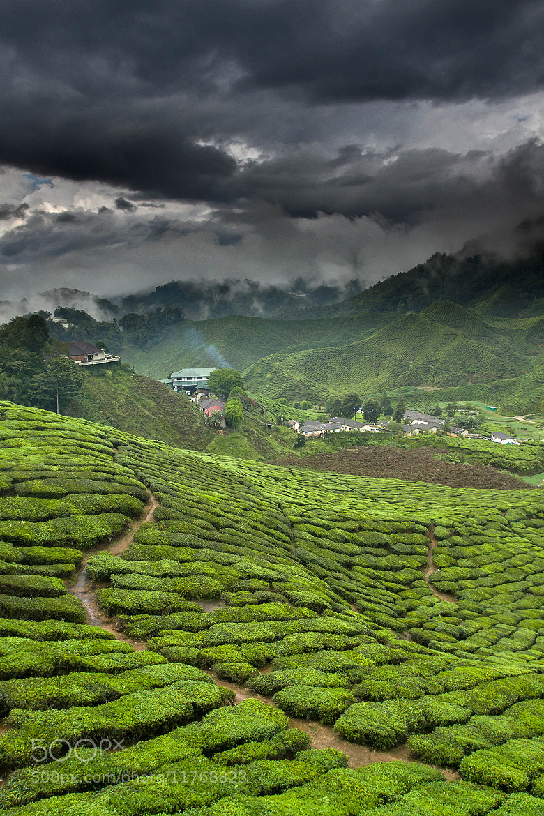 Photograph Green tea factory by Jeffrey Groeneweg on 500px