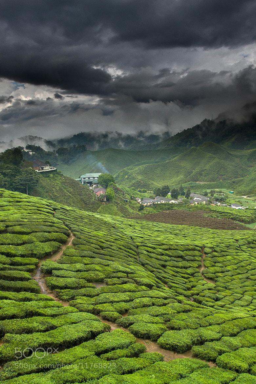 Photograph Green tea factory by Jeffrey Groeneweg on 500px