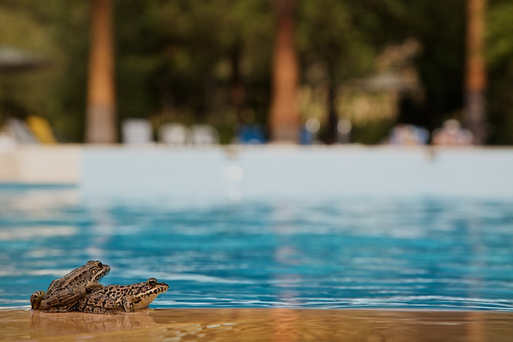 Photograph Poolside Frogs by vicky  fry on 500px